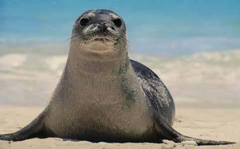 UN ANIMALE DA SALVARE: LA FOCA MONACA DEL MEDITERRANEO (prima parte)