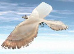 UCCELLI NEL MITO (terza parte) -l'uccello Rukh-