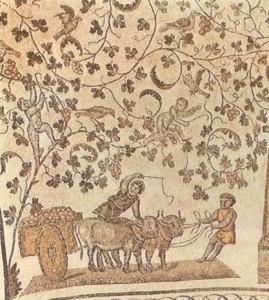 Vendemmia in mosaico di S. Costanza a Roma (IV secolo).
